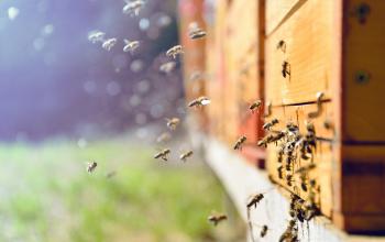 Jak stosować naturalną pierzgę pszczelą